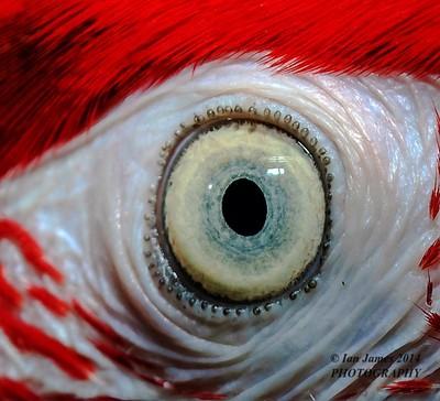 Parrots Eye