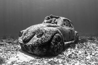 VW Ocean Dreaming