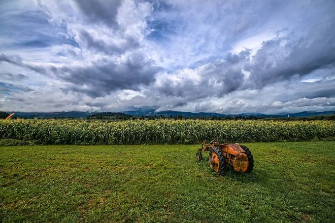 Waiting for a chance by gappman - Farming Photo Contest