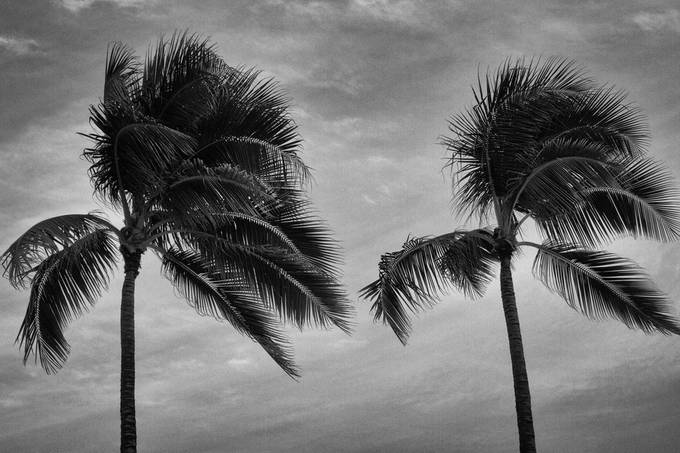 Waikiki Wind by WileKyK - Palm Trees Photo Contest