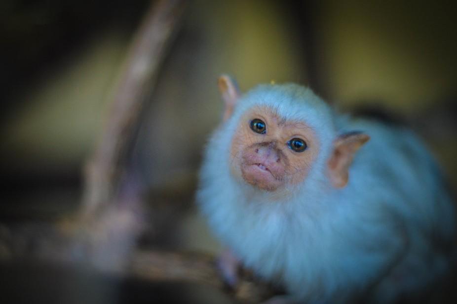 Cutest little monkey