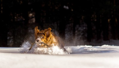 Fetch in the snow