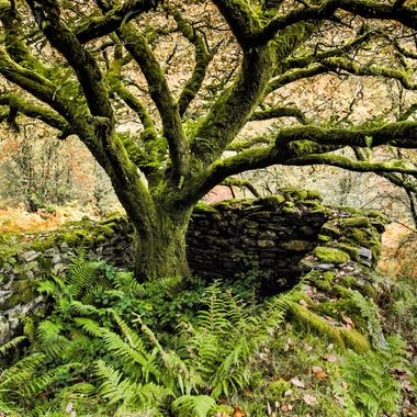 I passed this tree in a forest in Snowdonia, this old building was a dwelling in ancient times.