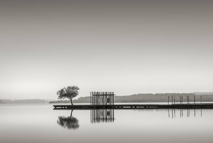 pier-tree_low_sepia by pauljackson_4080