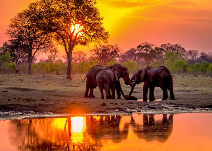 Hwange Sunset Elephants at Waterhole-3 by Pegertler - Bright And Colorful Photo Contest