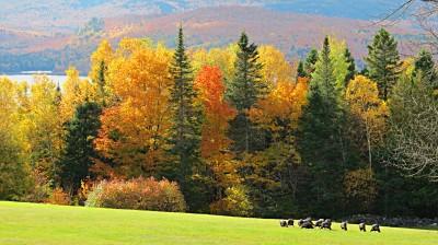 Autumn, Moosehead Lake, #6