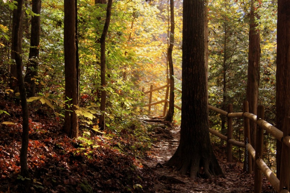 path to fairyland...