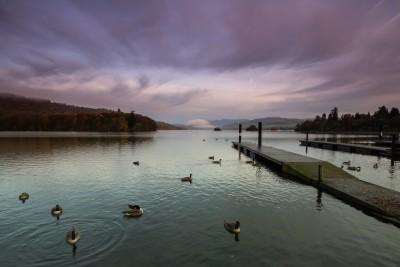 Windermere Geese at Dawn