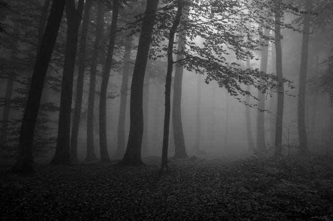 Dark Forest 2 by pemaphoto - Dark Forest Photo Contest