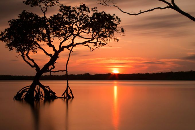 kauri sunset 3 by iwashere2 - Photos With Filters Photo Contest