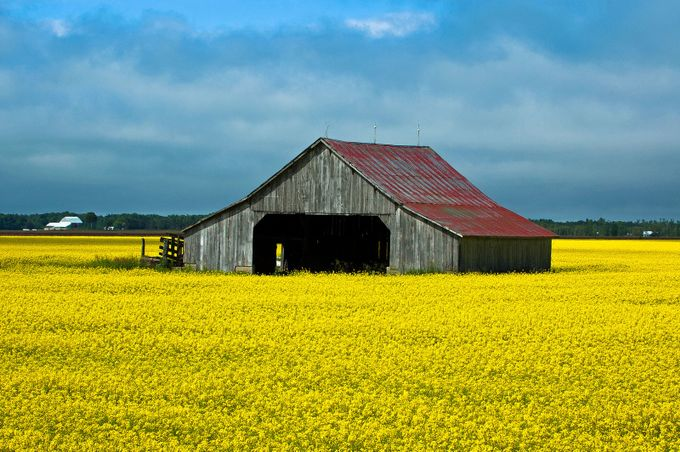 Mustard Field by JohnStager - Meadows Photo Contest