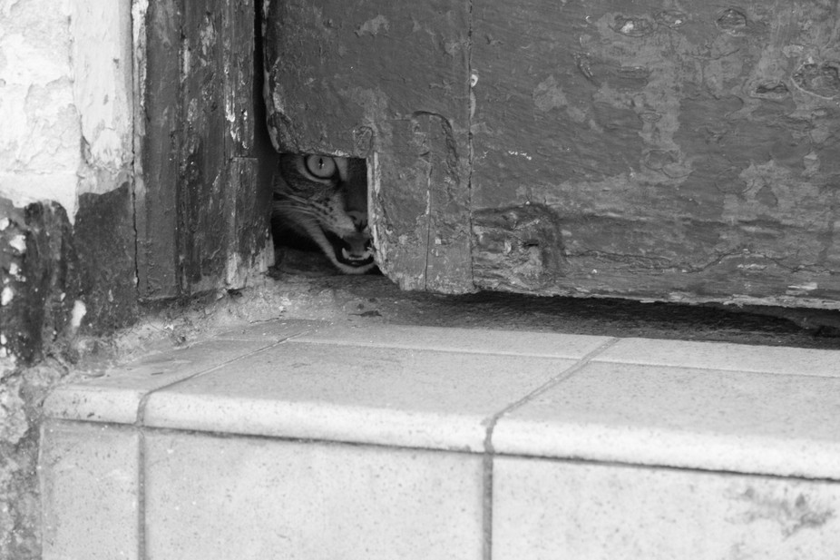 i heard a crying, put my camera to the doorway to find out what it was and caught this little cri...