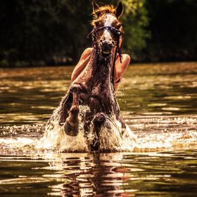 Horse jumping while in the river with rider on its back.