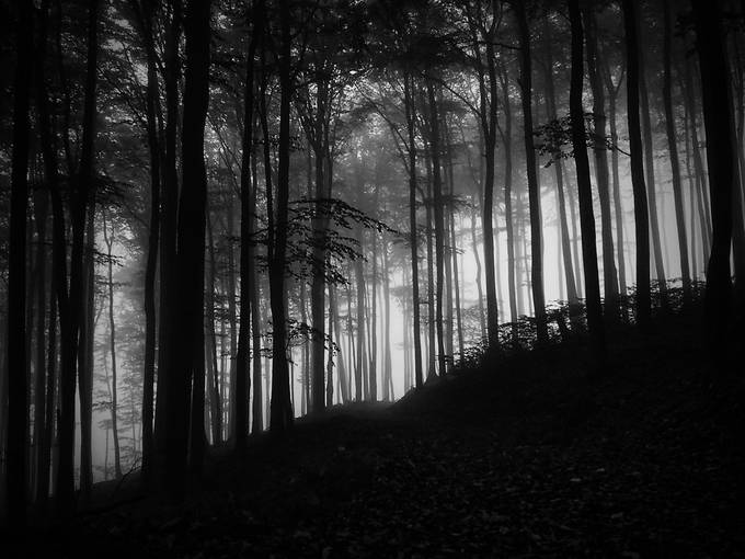Haunted Forest by TSimoncik - Dark Forest Photo Contest