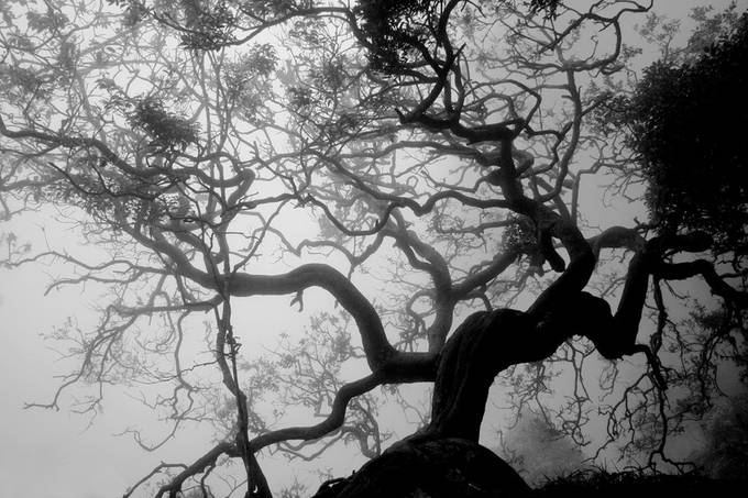 The dark world by zoomgfx - Dark Forest Photo Contest