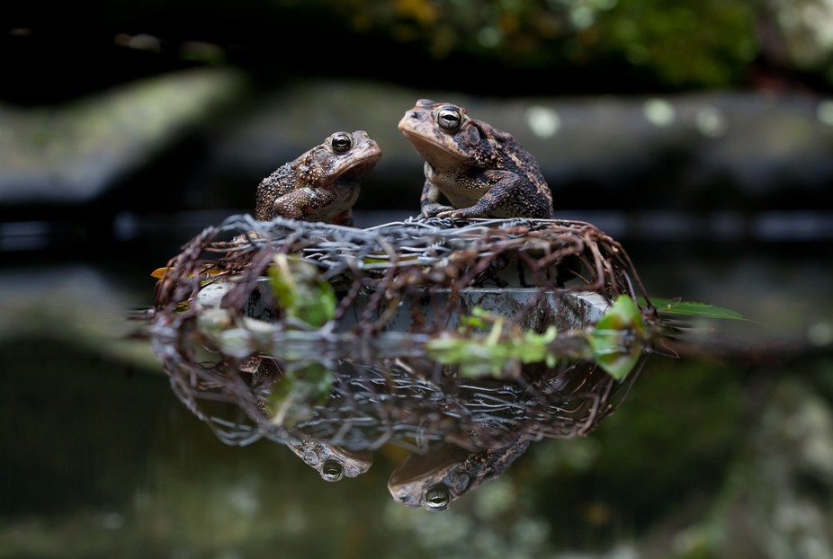 A Toad\'s Life