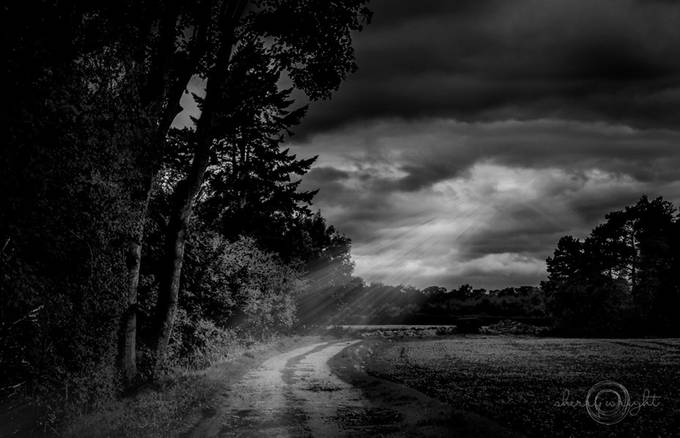 Moonlight in Yorkshire by Budgie - Dark Forest Photo Contest