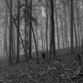son in foggy forest