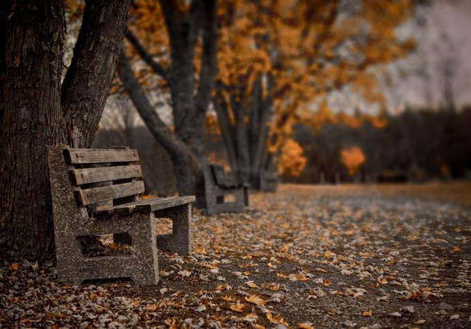 A Nice Place To Sit by TimmyLancaster - My Favorite Chair Photo Contest