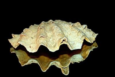 Treasure of Seabed 3