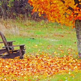 Fall Scene with Chairs