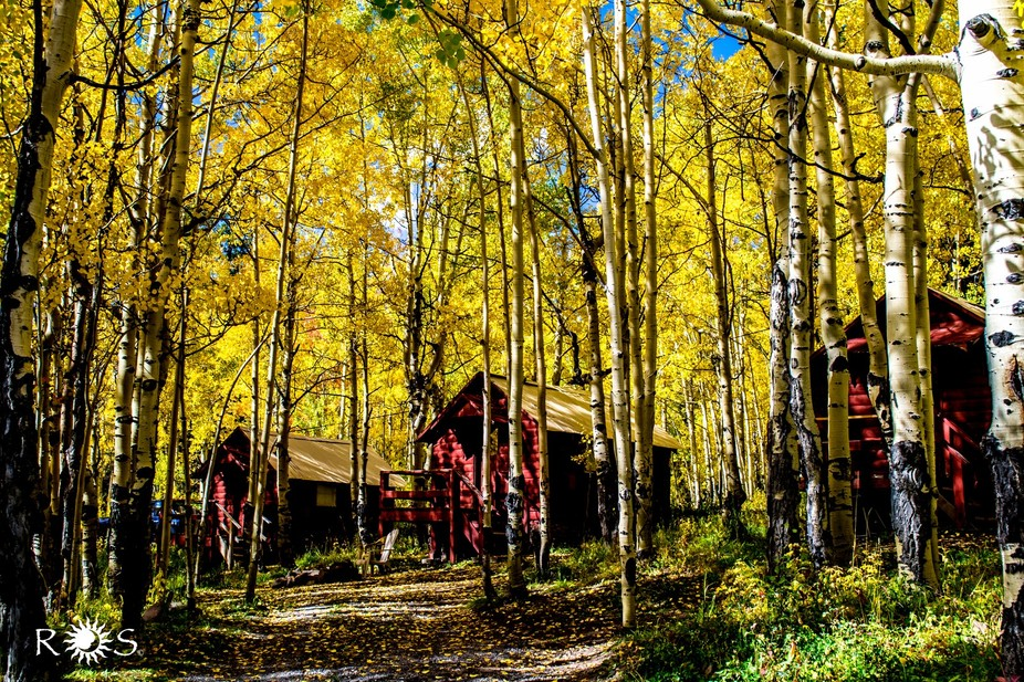 Red cabins stand out against the Aspens in Grand Mesa, Colorado