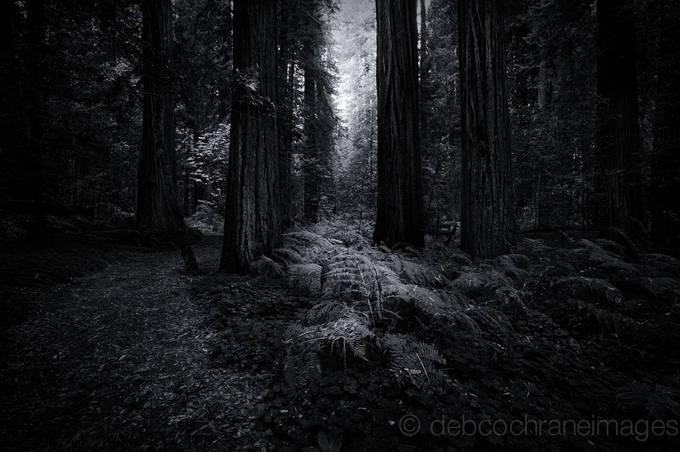 Dark Forest by debcoimages - Dark Forest Photo Contest