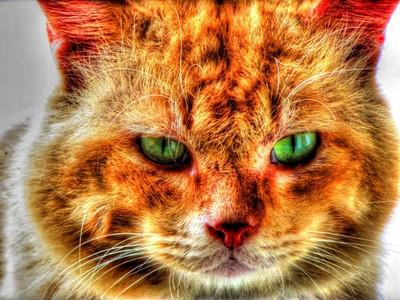 Garfield @ the House