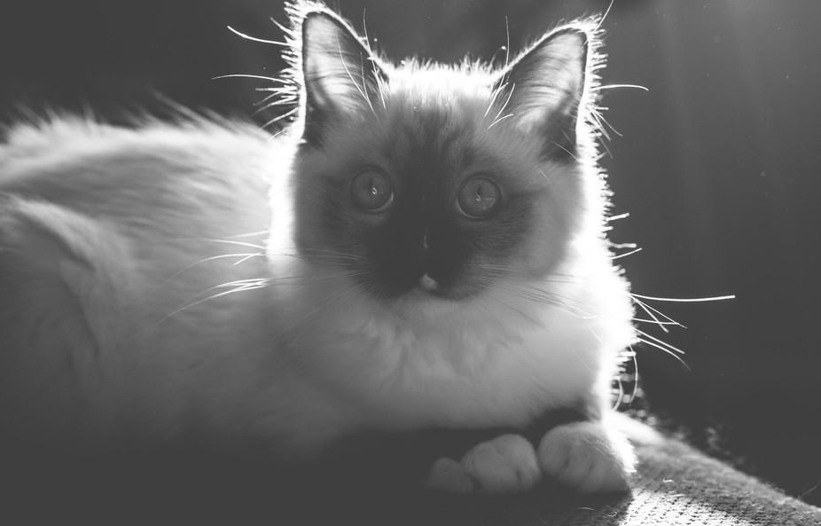 My new kitten, Sheldon Pooper.