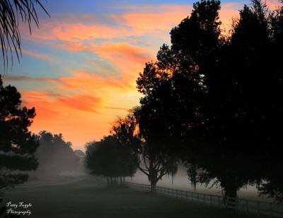 Ocala Morning