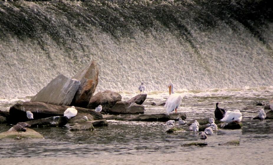 Pelicans & Waterfalls