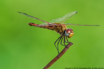 Dragonfly sitting on a barbwire