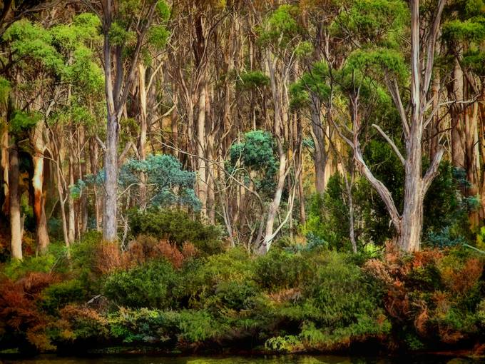 Mystical magical Tasmanian bush