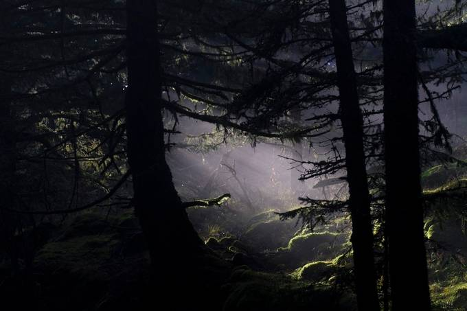 Heart of the Forest by SarahArquittPhotography - Dark Forest Photo Contest