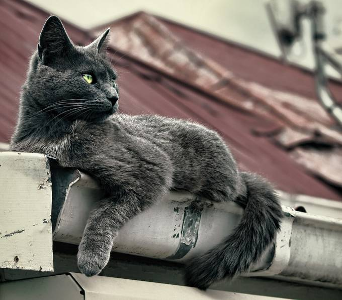Bella, our cat, chilling out in the roof gutter.