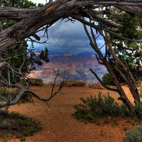 Grand Canyon framed by Pinion pines at the south rim