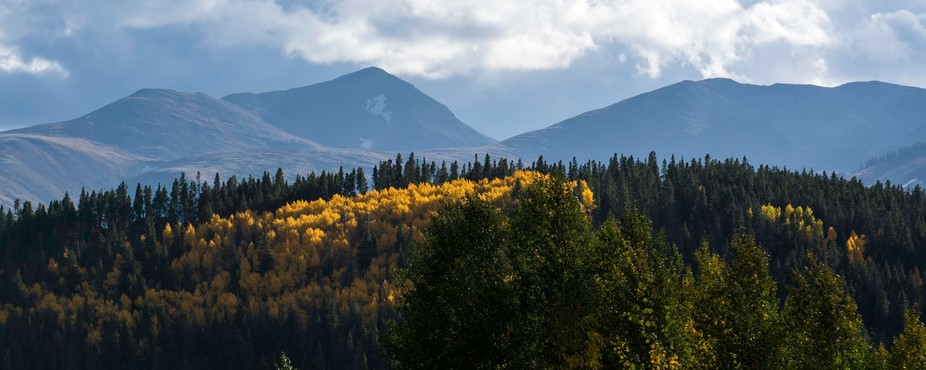The glow of the aspens highlighted in front of the Rocky mountains near Breckenridge, CO.