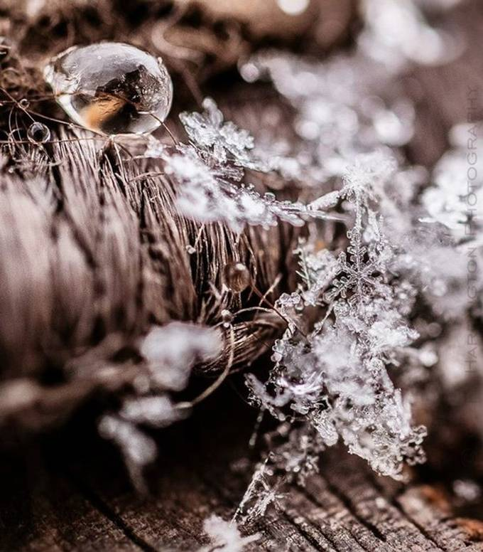 by cfharringtonphotography - Snowflakes Photo Contest