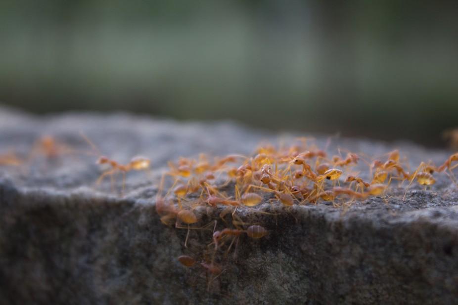 Life of Ants
