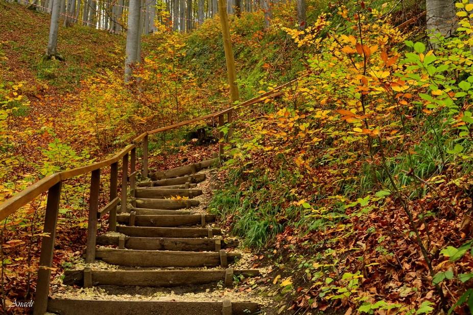 Autumn Colors near Rasnov, Romania