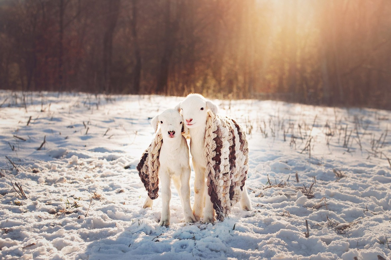 68 Creative Examples Of How Capture The Early Signs Of Winter