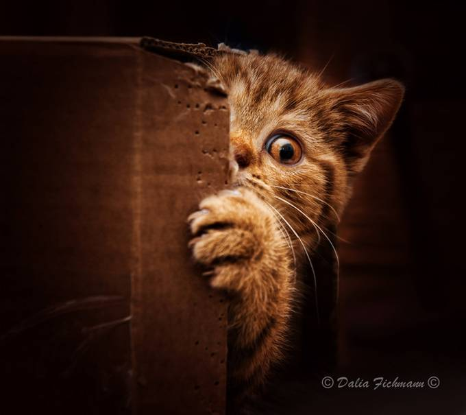Hide and seek by CreativeArtView - Can You See Me Photo Contest