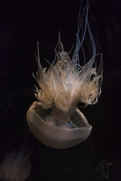 Medusa Descending