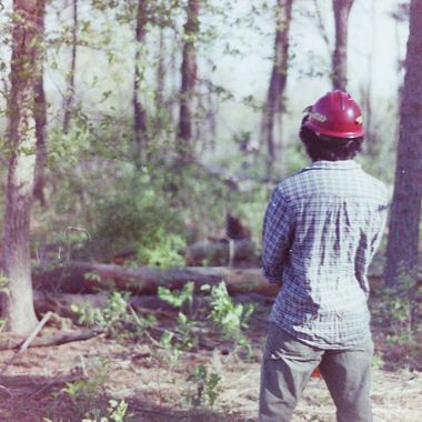 Member of AmeriCorps St Louis Emergency Response Team watching out as teammate fells tree at Cuiver River State Park, MO.