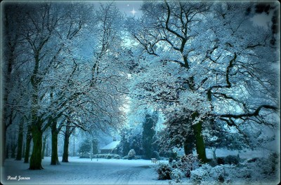Winter Glory, (A ray of hope).