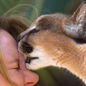 Annette is an trainer at the San Diego Wild Animal Park. Cat is an Caracal, native of the middle east and of India. Habatat high desert and savan...