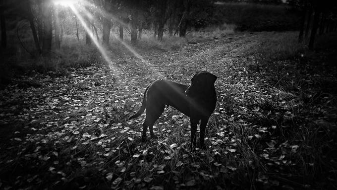 Silhouetted in the Sun by Lulumareeimages - Feeling Hope Photo Contest
