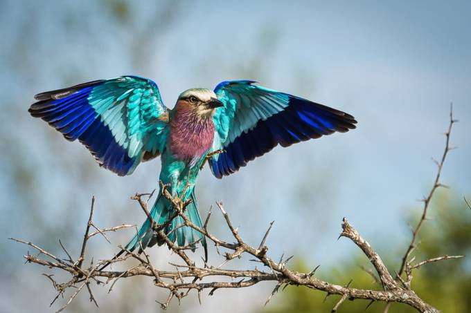 Spread Your Wings Viewbug Com