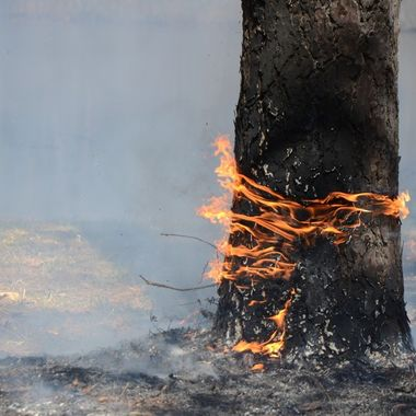 Prescribed Burn in the Mark Twain National Forest (Missouri).