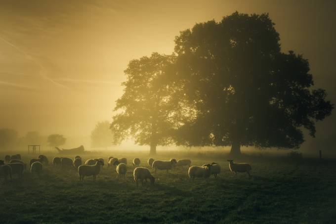 Before dawn gathering by CPF_Photography - Magical Light Photo Contest